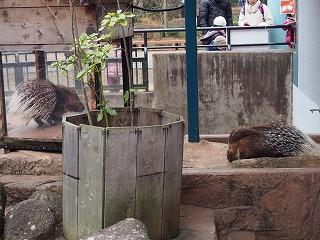 inokashira-zoo90.jpg