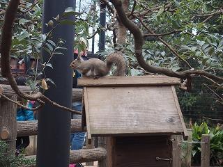 inokashira-zoo92.jpg