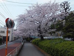 meguro-street34.jpg