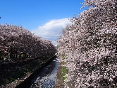 zenpukuji-river14.jpg