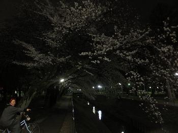 zenpukuji-river5.jpg