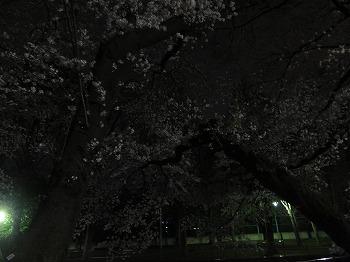zenpukuji-river6.jpg