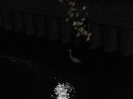 zenpukuji-river8.jpg