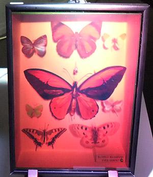3D昆虫標本01
