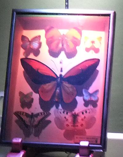 3D昆虫標本03