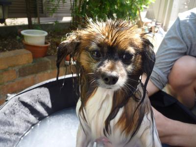 ハッピーの水浴び♪