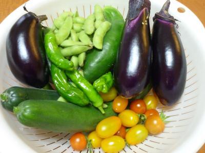 庭の野菜収穫