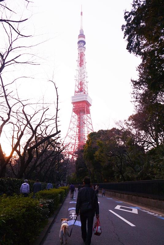 20140316yuuyake.jpg