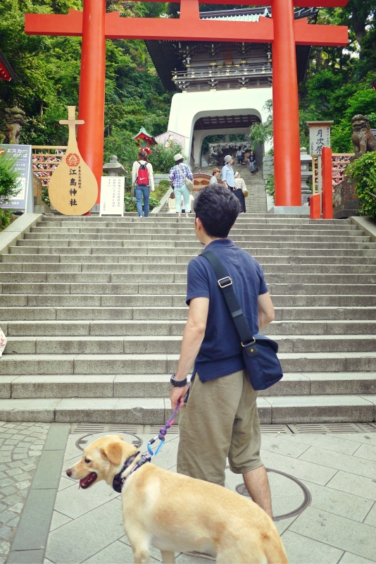 20140604enoshima03.jpg