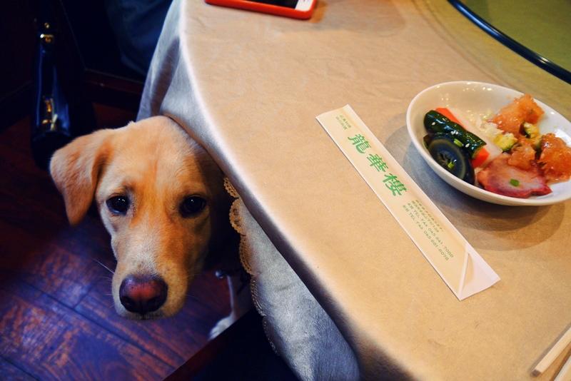 中華街 犬