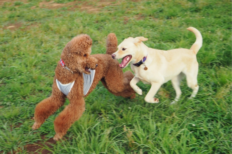 dogrun20140603.jpg