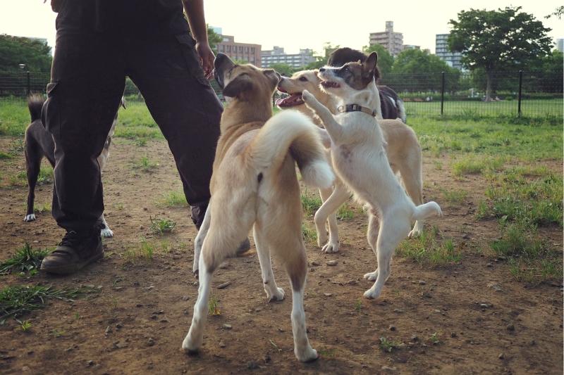 dogrun20140606.jpg
