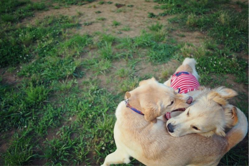 dogrun20140609.jpg
