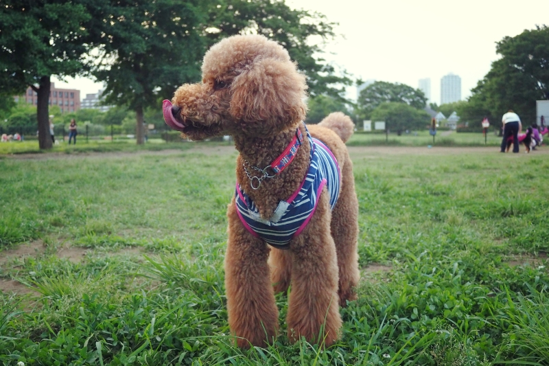 dogrun20140611.jpg