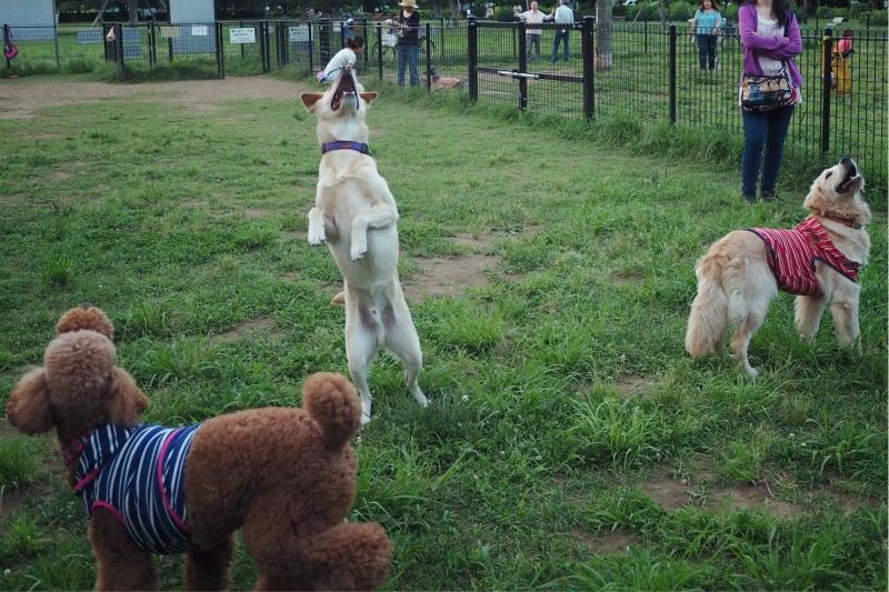 dogrun20140615.jpg