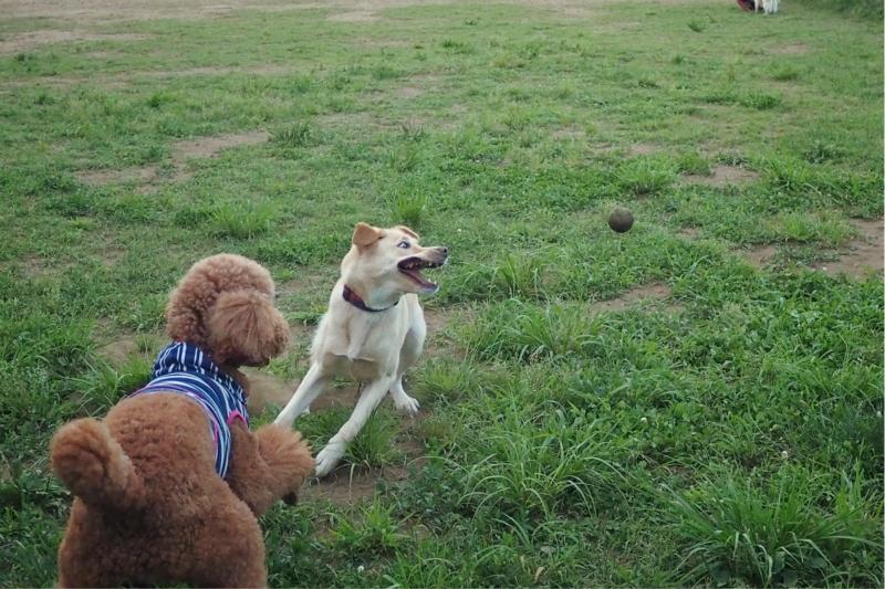 dogrun20140616.jpg