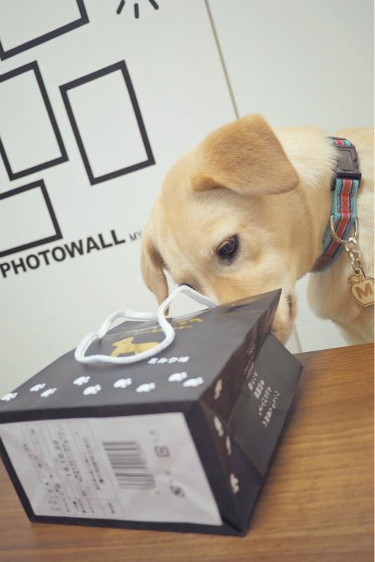 dogrun2014062612.jpg