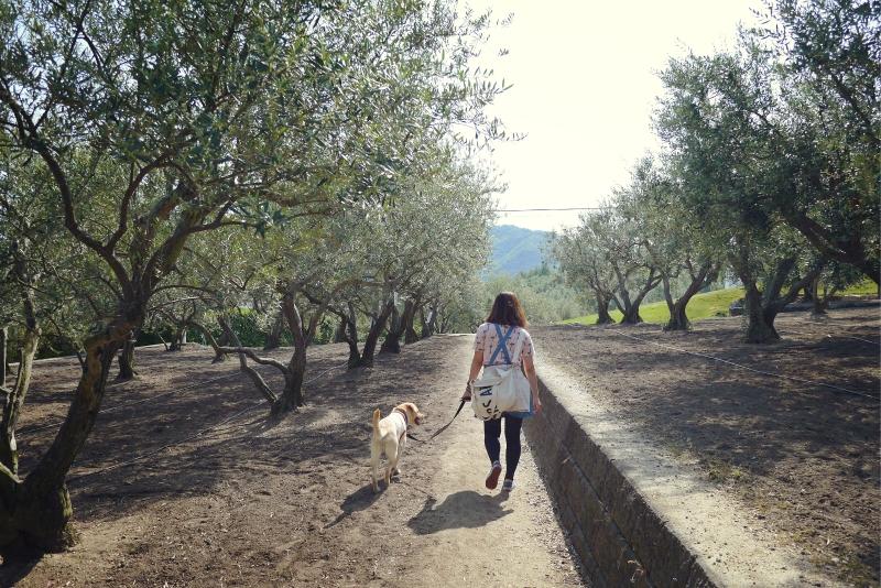 olive07.jpg