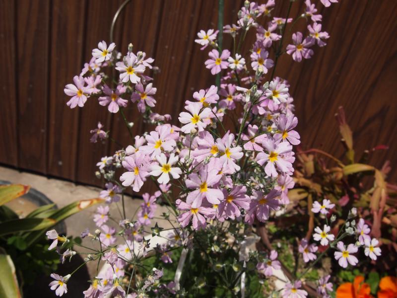 うすむらさきの小花
