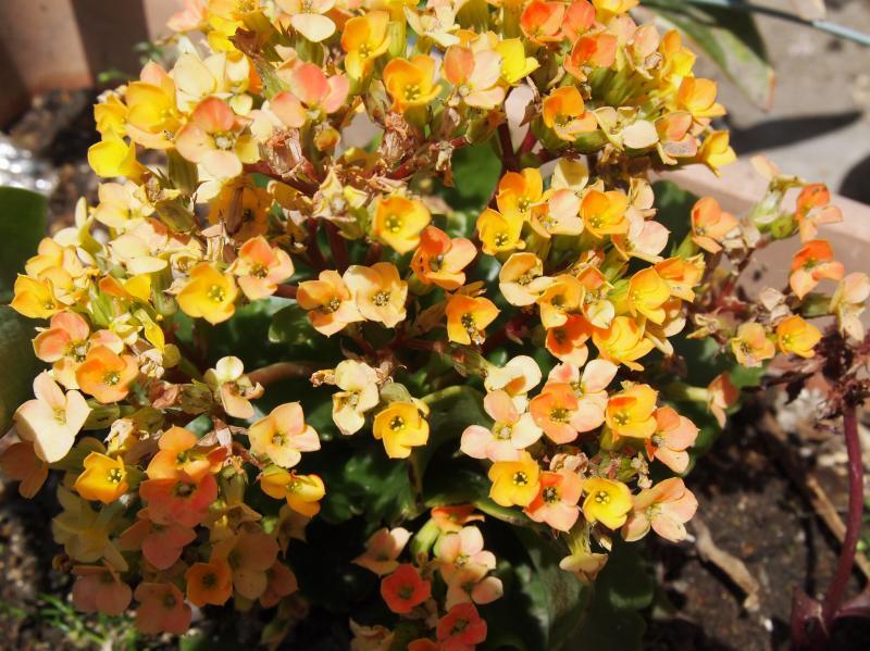 おひさまの花1