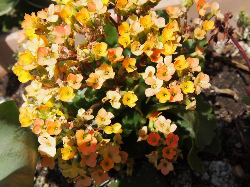 おひさまの花3