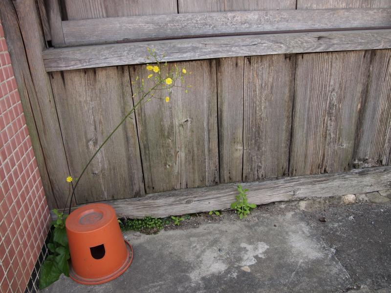 片隅のちいさな黄色い花