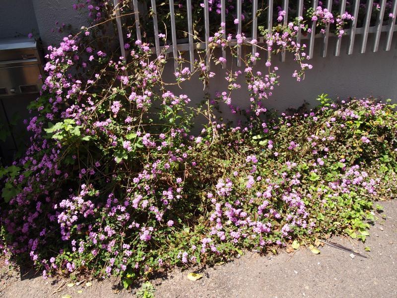 光とむらさきの花の道