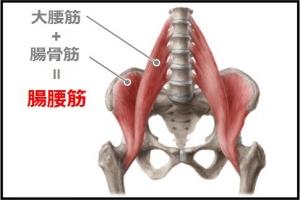 innermuscle.jpg