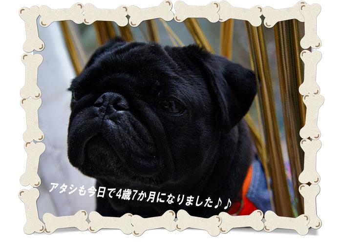 円トップ4歳7か月