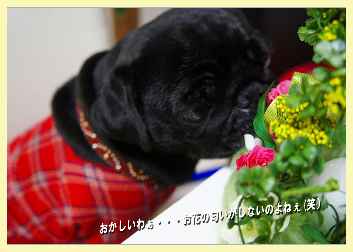 お花の匂いがしない
