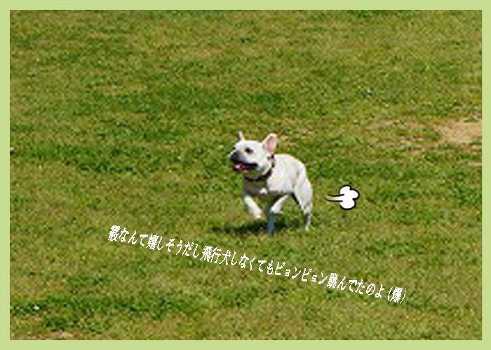 あられ飛行犬