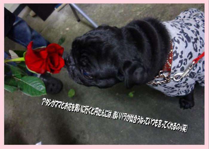 赤いバラが似合う