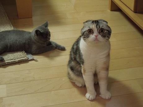 ママ~ 遊んで!