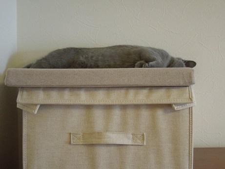 座布団と一体化