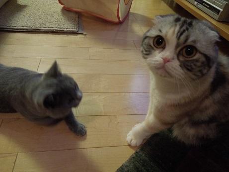 ママ 助けてくだしゃい