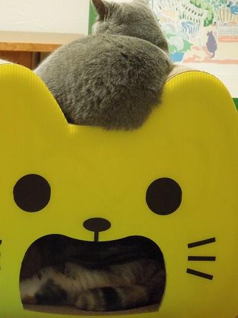 黄色いネコさんも奪ったモモ