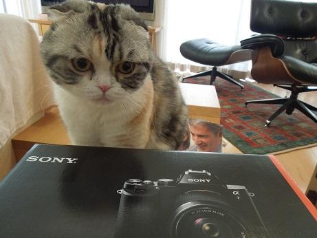 カメラチェック