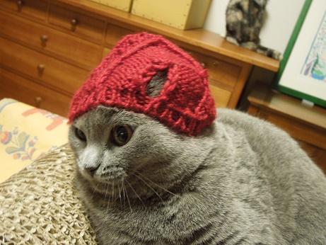 モモの帽子姿