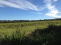 Tursday Plantation 2014 8 アロマスクール マッサージスクール オーストラリア