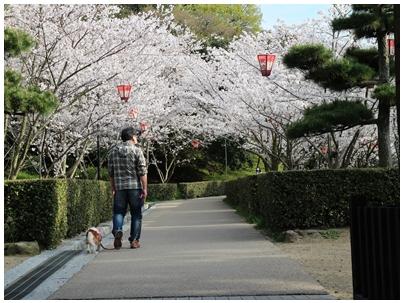 お花見3(帰り)
