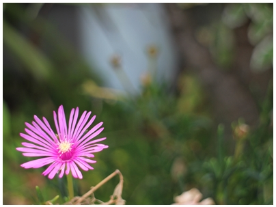 260722善通寺の花