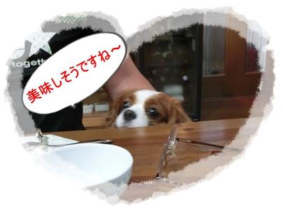 ⑤pocoと食事