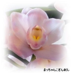 あんみつ姫の花