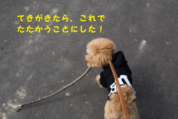 DSC_0153.jpg