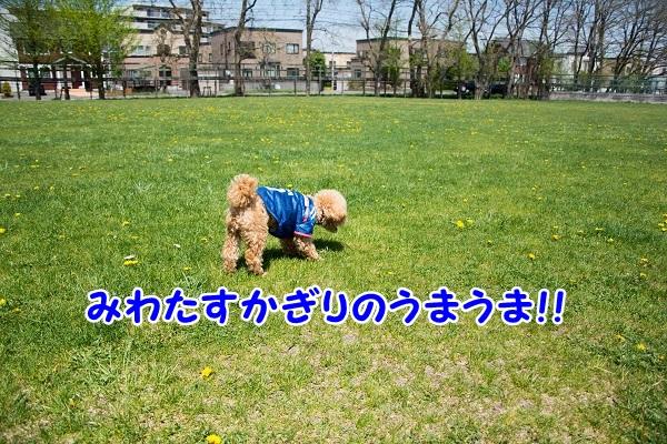 DSC_0489.jpg