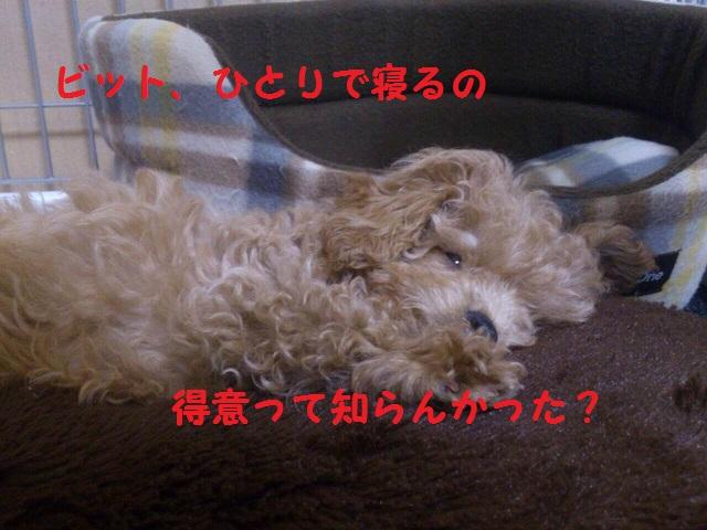 photo1-6.jpg