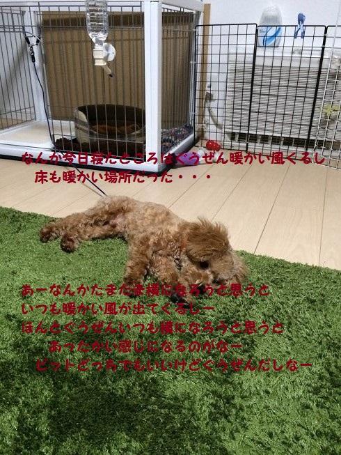 photo3-1.jpg