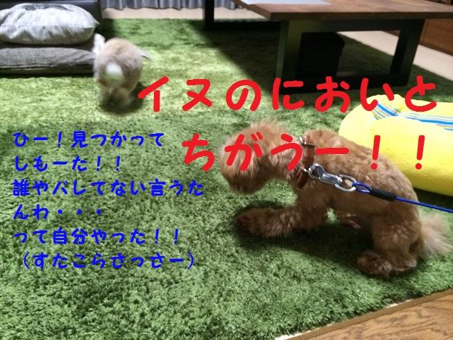 photo3-9.jpg