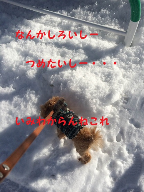 photo4-4.jpg