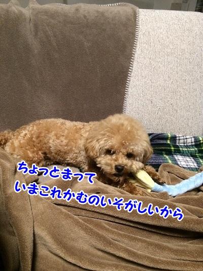 photo7-10.jpg